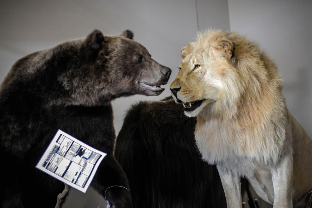 Bear and lion mounts
